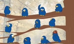 Twitter Hunter - наглые птички