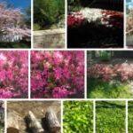 Новые примеры фотографий, снятых на камеру Nokia Lumia 900