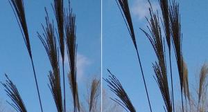 Пример 3 образец фото Lumia-920