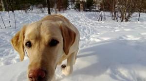 Любвеобильный пёс(smerikal)