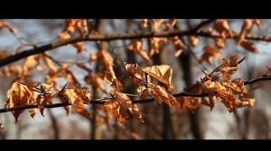 Засохшие листья (Zerofender)