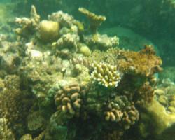Nokia Lumia 800 — снимаем под водой!